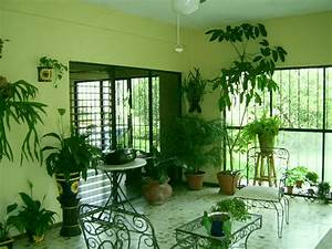 Plants inside rooms for Interior decorating houseplants