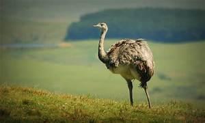 ¿Sabías que estos animales autóctonos de Uruguay están en peligro de extinción? Noticias