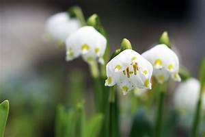 Was Sind Frühlingsblumen : 18 fr hlingsblumen nach farben sortiert liste mit namen ~ Whattoseeinmadrid.com Haus und Dekorationen
