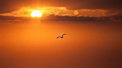 Sunset Bird Freedom Sun 4k Orange Disk