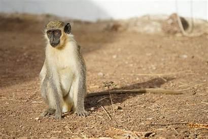 Monkey Language Experiments Gfx
