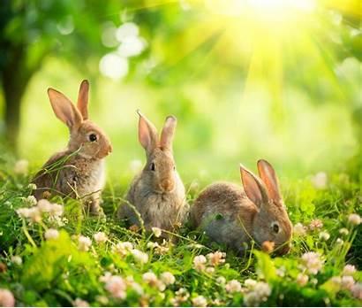 Bunnies Rabbit Wallpaperaccess Bunny Tab Theme Wallpapers
