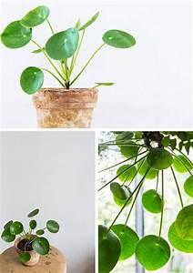Große Zimmerpflanzen Pflegeleicht : die 25 besten ideen zu zimmerpflanzen auf pinterest ~ Lizthompson.info Haus und Dekorationen