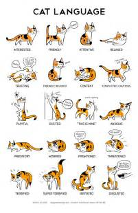 what does it when cats wag their what is the meaning of a cat walking with its