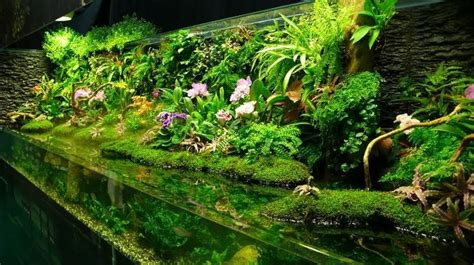 land and water aquarium i this tank half water half land aquarium terrarium and pets