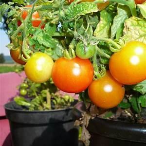 Gemüse Auf Dem Balkon : urban gardening gem se auf dem balkon anbauen bei ~ Lizthompson.info Haus und Dekorationen