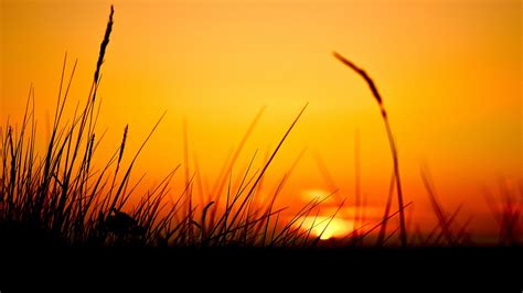 grass, Sun Wallpapers HD / Desktop and Mobile Backgrounds