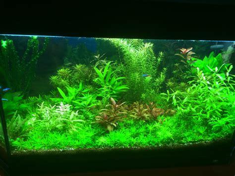 quelle eau pour aquarium quelle plante pour un beau gazon dans aquarium
