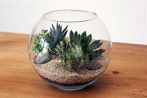 Choosing the best plants for your terrarium quiet corner for Terrarium plants