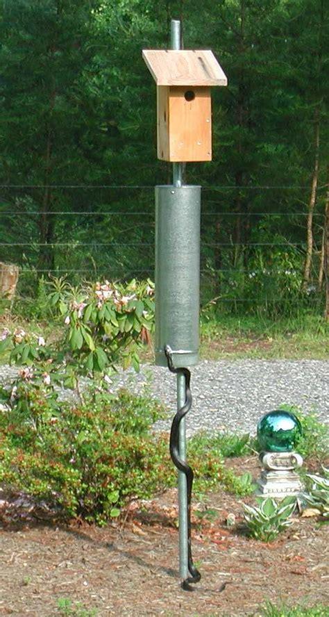 purple martins    woolwine house bluebird trail