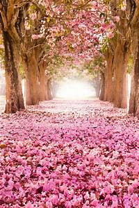 Pink indus flowers, path, trees, beautiful scenery iPhone ...