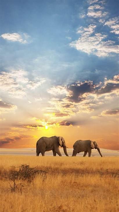 Elephant African Galaxy Wallpapers Samsung Wallpapersafari S5