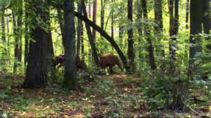 planet earth seasonal forests - YouTube