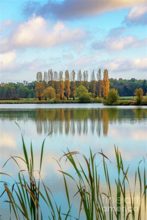 Poplars reflecting in a pond by Delphimages Photo Creations | Photo, France photography, Poplar