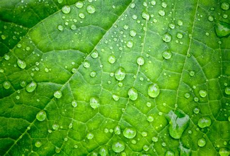 water drops  green leaf wallpaper  offices wall decor