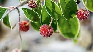 Exotische Früchte Im Eigenen Garten : im garten ~ Lizthompson.info Haus und Dekorationen