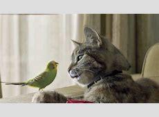 Birds Dawn Productions