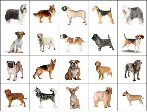 dog breeds  film click quiz  jackdots