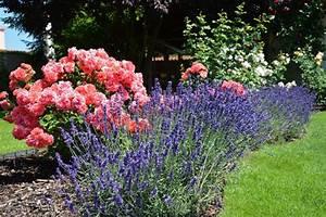 Rosen Und Lavendel : welcher garten passt zu mir n tzliche tipps f r eine erfolgreiche gartenplanung annas garten ~ Yasmunasinghe.com Haus und Dekorationen