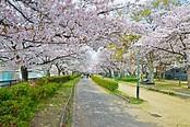 Ueno Park & Zoo - Tokyo: Get the Detail of Ueno Park & Zoo ...