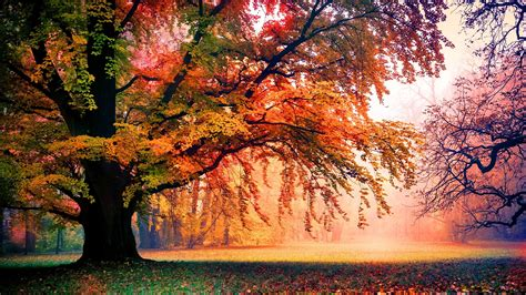 Colourful Autumn Background by Colorful Autumn Trees 4k Ultrahd Wallpaper Wallpaper