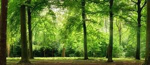 The German Forest My friend the tree  GoetheInstitut