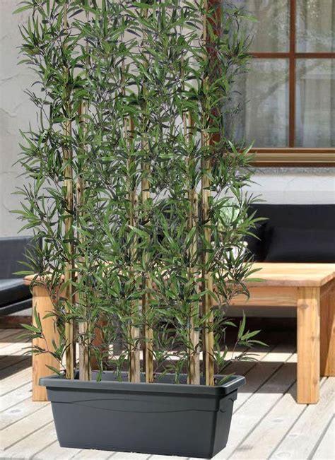 bambu in vaso siepe di bambu in vaso