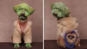 Amazing Dog Grooming