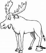 Coloring Kelp Forest Moose Animals Drawing Getdrawings sketch template