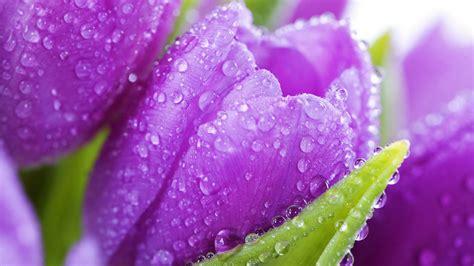 Beautiful Flowers Desktop Wallpaper