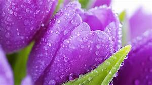Beautiful Spring Flower Drops Awesome HD Love Wallpaper ...