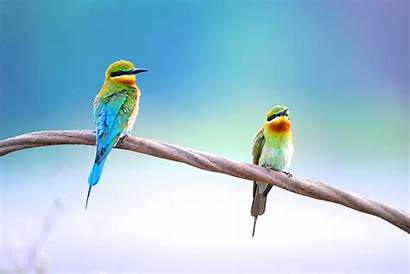 Birds Audubon Shutterstock Society Environmental Wildlife Gets