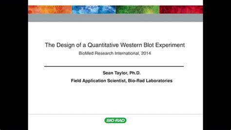 Designing a Quantitative Western Blot Experiment to Avoid ...