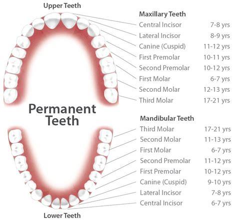 mendon ny mendon family dental