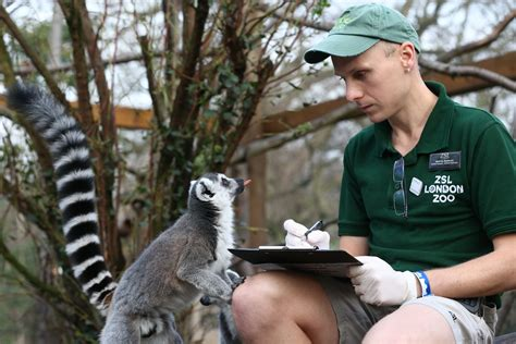 zoo animals zookeeper london animal zoos stocktake annual internship taking fill right