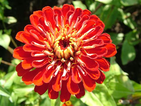 a picture of a flower flower picture flower wallpapers