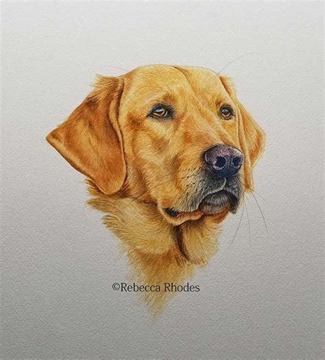 how to paint a golden retriever in watercolors by