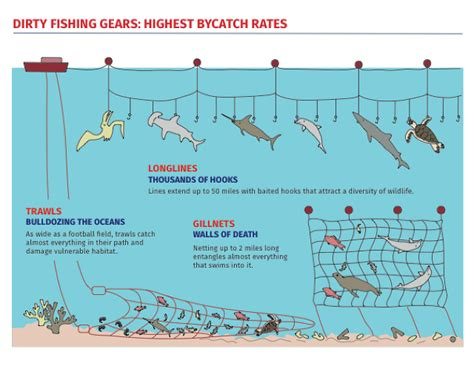 fishermen throw   billion pounds  fish  year