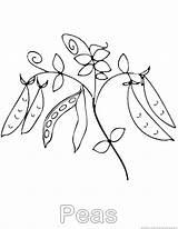 Peas Coloring Vegetable sketch template