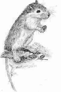 Können Mäuse Klettern : k figbeispiele ~ Markanthonyermac.com Haus und Dekorationen