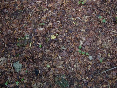 forest floor texture forest floor by piewedge stock on deviantart