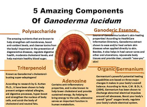 What is Ganoderma Lucidum? » GanodermaCoffee.org.uk
