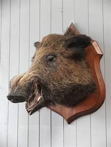 Antique French Wild Boar Head Taxidermy Shield Wall ...