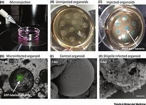 Disease Modeling In Stem Cell