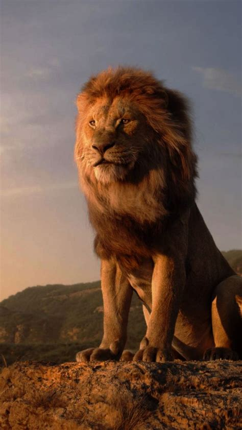 wallpaper  lion king hd movies