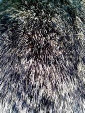 Free Picture Fur Rabbit Close