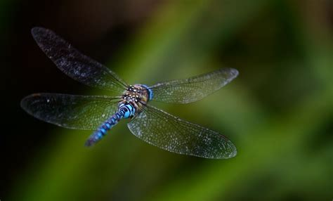 free photo dragonfly fly background blurred free