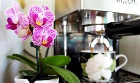 kaffeesatz als dünger für orchideen richtig und vielf 228 ltig kaffeesatz als d 252 nger im garten anwenden wohnideen und dekoration