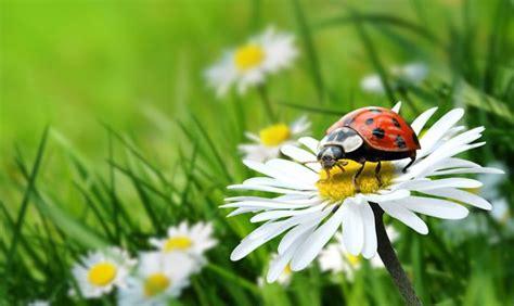 Nützliche Tiere & Pflanzen
