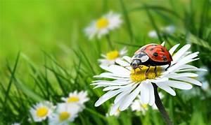 Pflanzen Gegen Spinnen : n tzliche tiere pflanzen 1000 haushaltstipps ~ Lizthompson.info Haus und Dekorationen